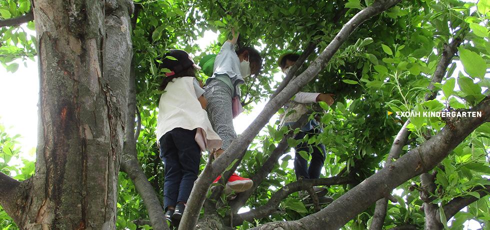 スコーレ幼稚園   岩手県盛岡市にあるスコーレ幼稚園の公式サイトです ...